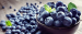 Wholesaler from Canada is looking for BLUEBERRIES