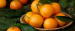 Wholesaler from UK is looking for CLEMENTINES
