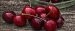Buyer from United Arab Emirates is looking for CHERRIES