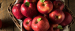 Importer from Egypt is looking for red apples